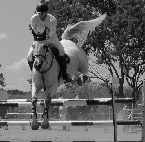 horse equitation tournament