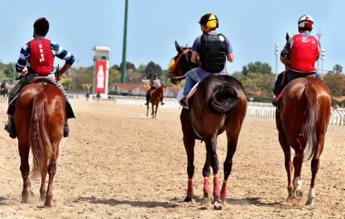 horse racing horses thoroughbred