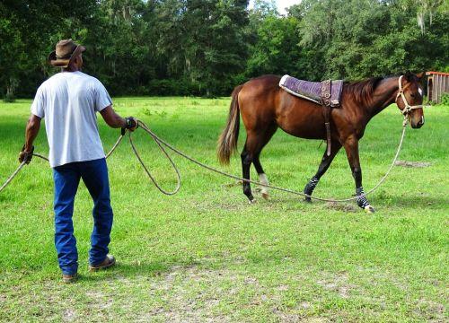 horse training trainer