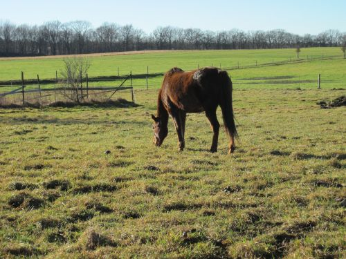 horse pasture graze