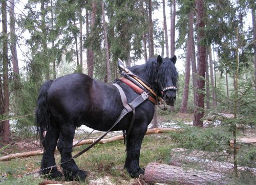 horse working in the forest concentration