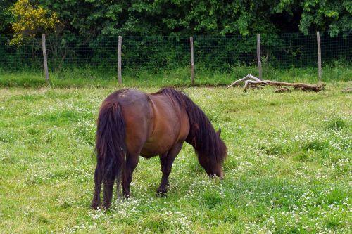 horse baio pasture