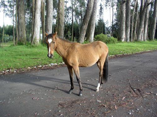 arklys,eukaliptas,ecuador