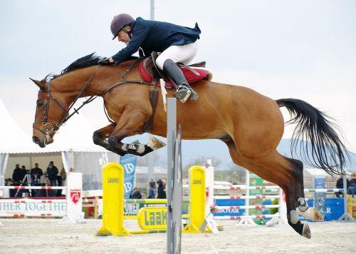 horseback riding horse leaping
