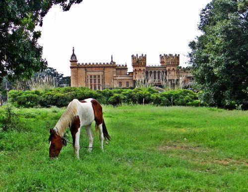horse grazing bangalore palace