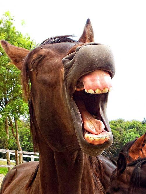 horse stallion animal