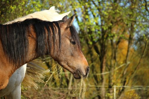 horse thoroughbred arabian brown mold