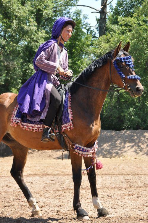 horse animals show