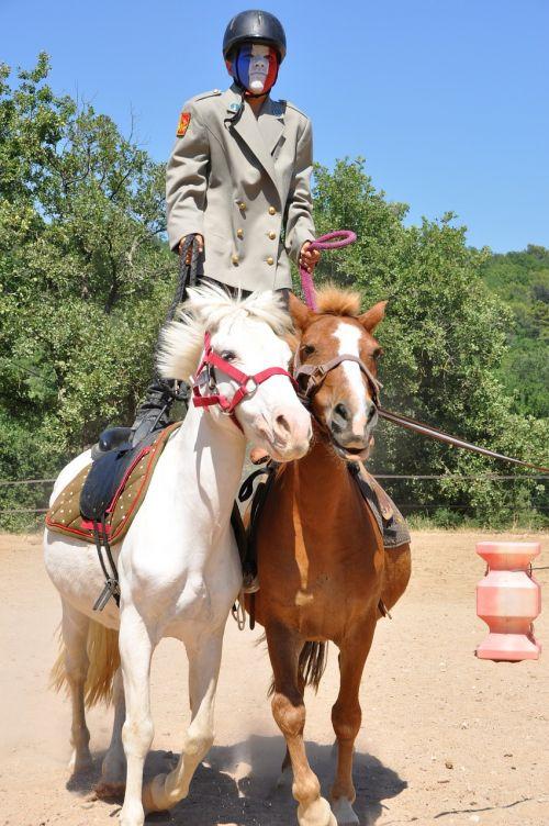 horses animals show