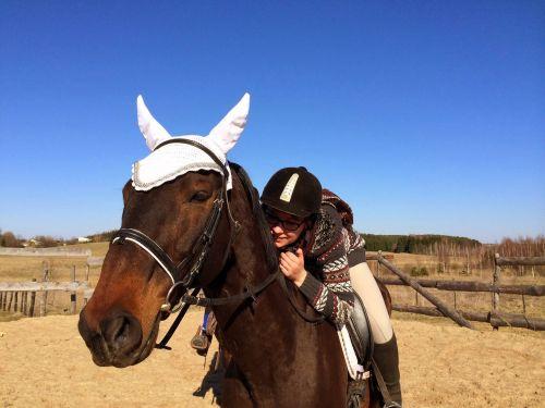 horse horseback riding riding