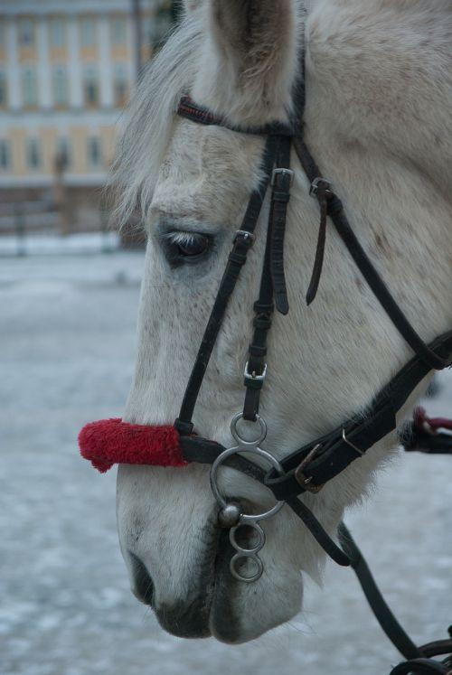 horse harness equestrian