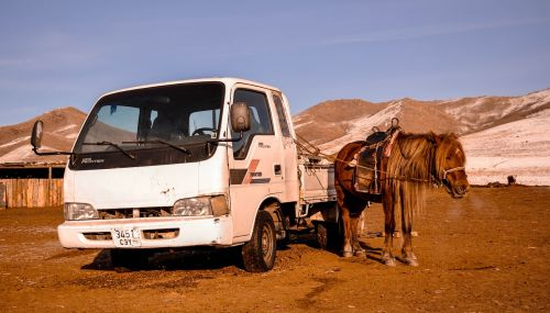 horse vehicle car