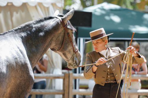 horse dressage contest