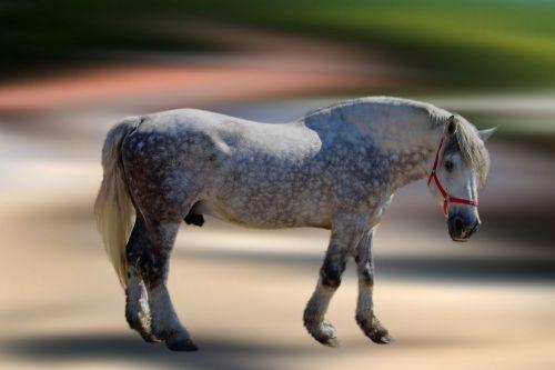 horse mold stallion
