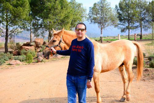 horse atlas mountains