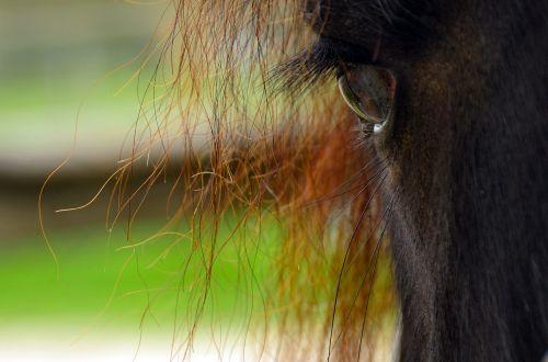 horse animal world wildlife photography