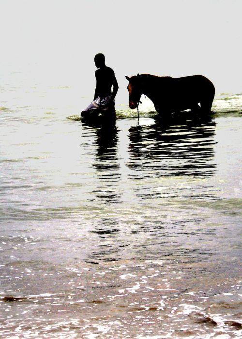 horse relationship man
