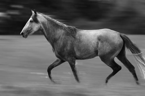 horse nature free