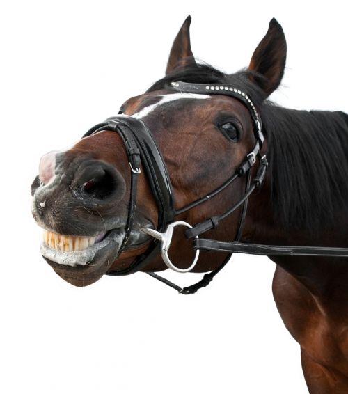 horse smile content