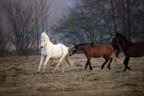 horse flock mold