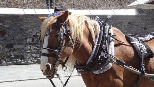 horse cart montreal