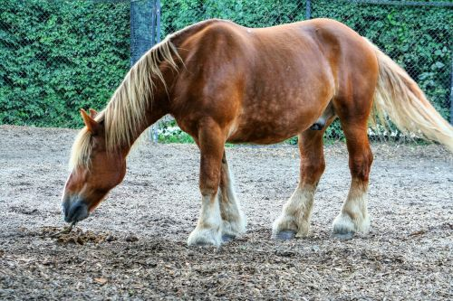 horse animals horses