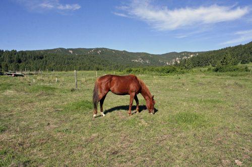 horse countryside saddle