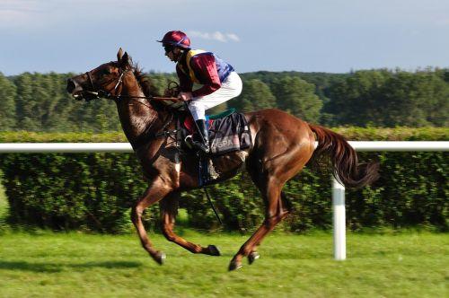 horse reiter gallop