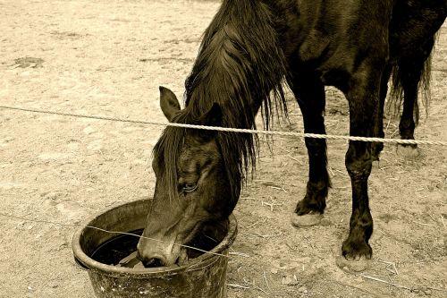 horse stallion stall