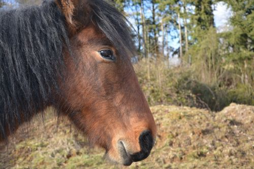 horse equines animal