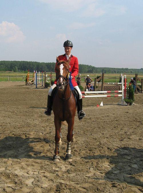 horse novisad serbia