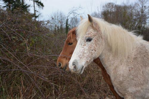 horse horses equines