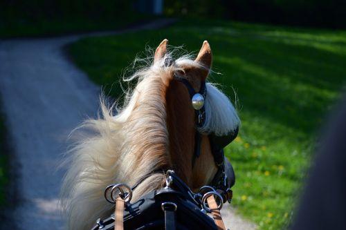 horse coach team