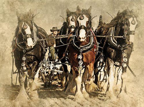 horse animal plowing