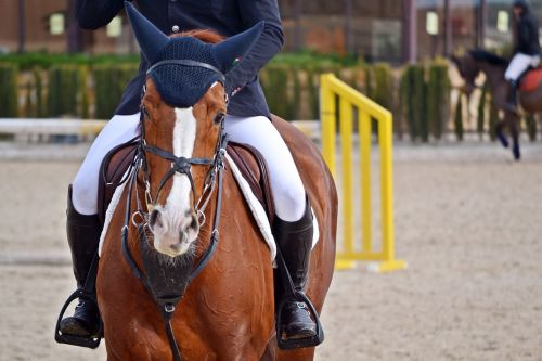 horse horse riding mount