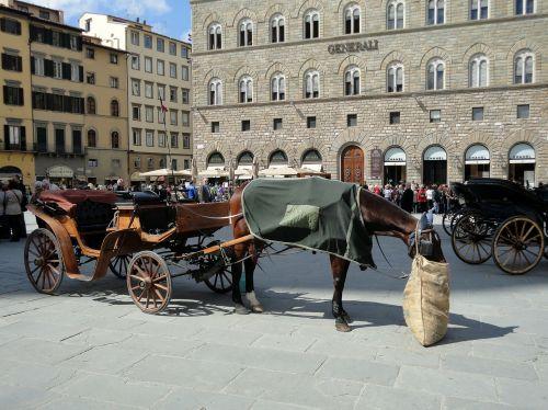 arklys,avižų maišelis,Florencija,Toskana,italy,pertrauka,maitinimas,arklių maitinimas