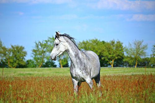 horse mold meadow