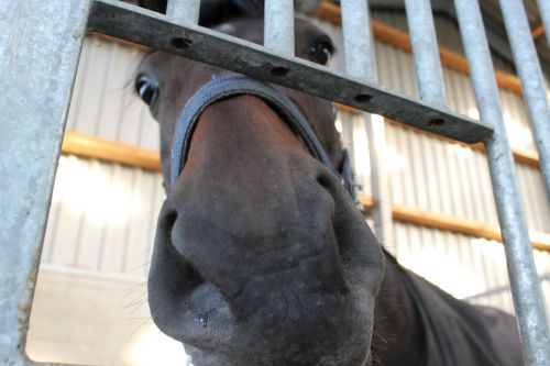 horse nose stable