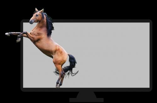horse television visual
