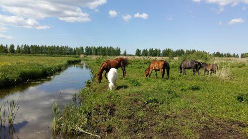 horse horses equine