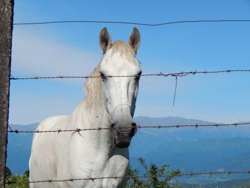 horse equine white