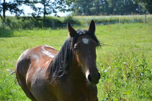 horse standard horseback riding