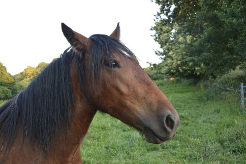 horse head equines