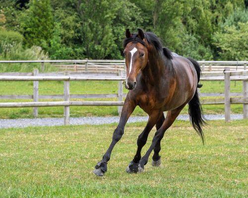 horse pre run