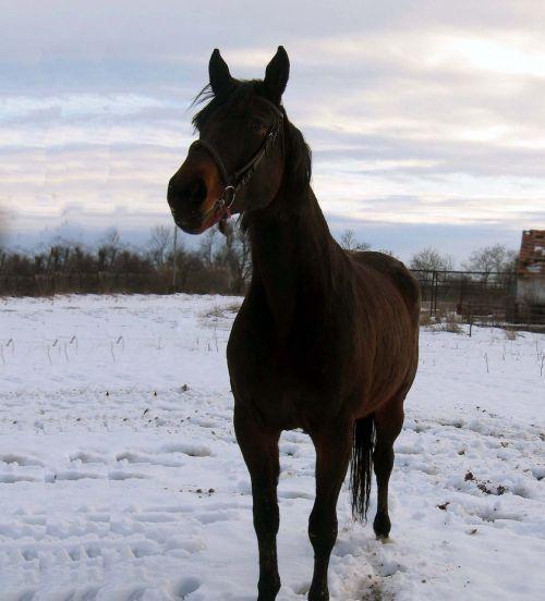 horse mare stallion
