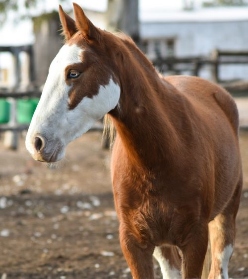 horse animal mare