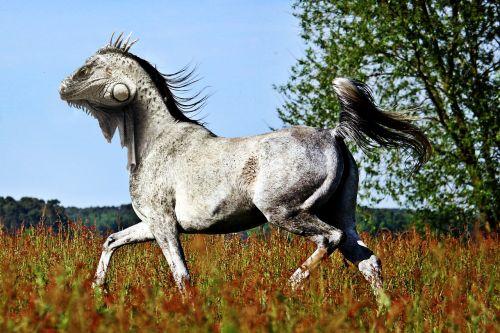 horse lizard pfechse