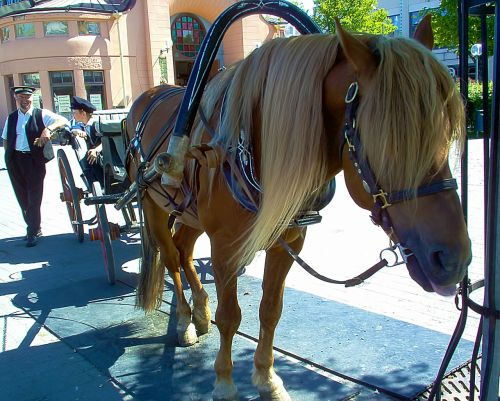 horse animal carriage