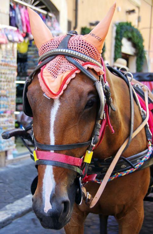 horse hitch drawn
