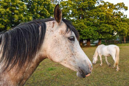 horse field horses